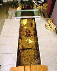 аквариум половой